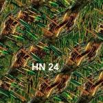 HN-24
