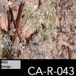 CA-R-043 neu